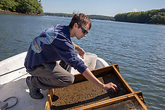521 Oyster Management Study, Georgetown, Maine
