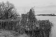 Brush along the Potomac River, Alexandria, VA