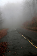 Road through beech woodland obscured by low cloud fog, Shipka Pass, Bulgaria, eastern Europe