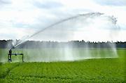 Nederland, Wellerlooi, 31-7-2013Boeren beregenen hun land vanwege de langdurige droogte.Foto: Flip Franssen/Hollandse Hoogte
