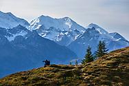 Niederhorn, Kanton Bern, Schweiz<br /> <br /> Niederhorn, Canton of Bern, Switzerland