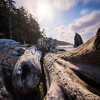 Large trees that have washed up on Rialto Beach rest under a full moon. © John McBrayer