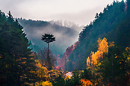 Small pine tree in the middle of a forest
