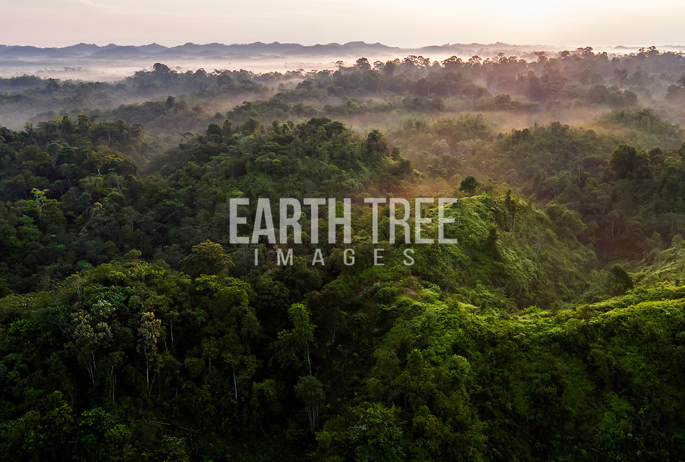 An aerial view of pristine rainforest of the Leuser ecosystem, Sumatra, Indonesia. Photo: Paul Hilton Forest cover, Leuser Ecosystem, Sumatra, Indonesia. The Leuser Ecosystem is home to the largest extent of intact forest landscapes remaining in Sumatra and it is among the most biologically abundant landscapes ever described. Photo: Paul Hilton for Earth Tree Images