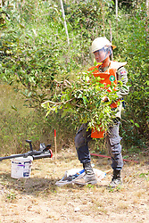 Clearing Brush In Demining Operation