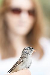 Man holding bird getting banded, with ladyin background, Mitchell Lake Audubon Center, San Antonio, Texas, USA.