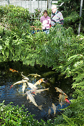 Older man and his carer looking at a fish pond in a park hot house,