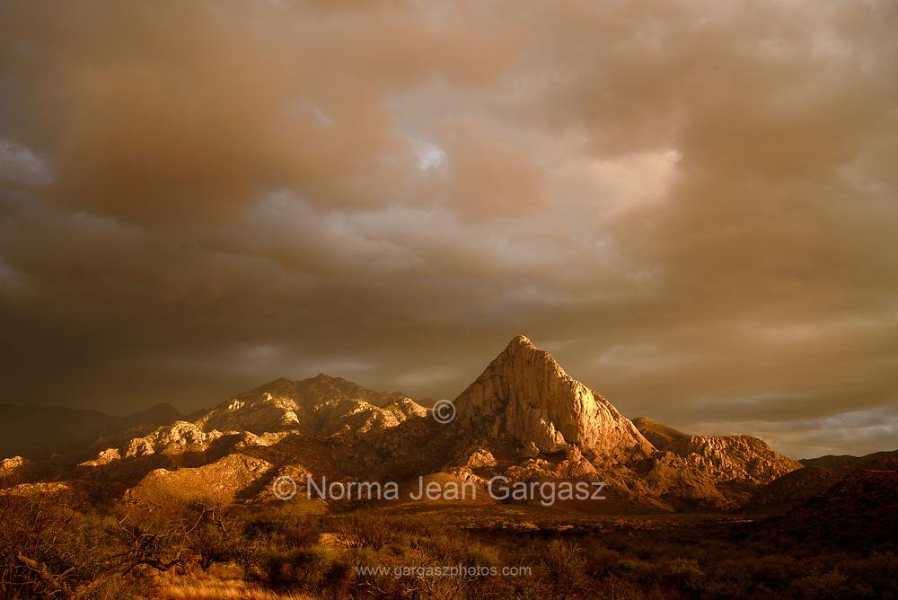 Elephant Head, Sonoran Desert, Coronado National Forest, Santa Rita Mountains, Green Valley, Arizona, USA.