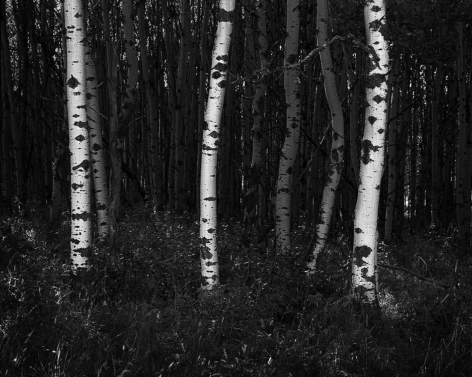 Three trees standing out from the crowd