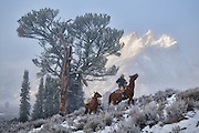 A wrangler and his pack horse passing by the Old Patriarch Tree with the faint Grand Teton Mountain range showing through the fog.
