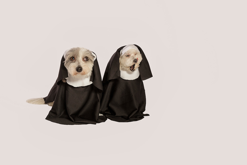 two small dogs dressed as nuns