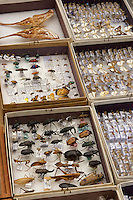 Part of the insect reference collection from the rain forest around Mu Village, Chimbu.