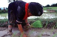 Yao woman planting rice..  Laos..photo by Owen Franken.