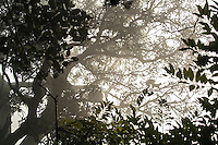 Treetops in Ranthambore National Park