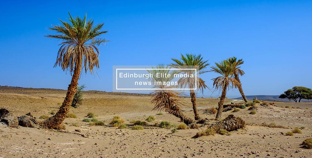 A small oasis in the Moroccan Sahara Desert<br /> <br /> (c) Andrew Wilson | Edinburgh Elite media