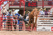 Bareback rider Matt Bright of Fort Worth, Texas is thrown from Citation at the Cheyenne Frontier Days rodeo at Frontier Park Arena July 24, 2015 in Cheyenne, Wyoming. Frontier Days celebrates the cowboy traditions of the west with a rodeo, parade and fair.
