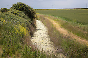 Eutrophication in drainage ditch on Oxley Marshes, Hollesley, Suffolk, England, UK