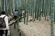 Asian tourist group walking through the bamboo garden at Hokokuji temple in Kamakura Japan