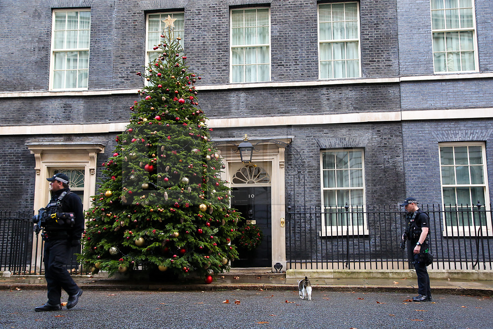 © Licensed to London News Pictures. 2/12/2018. London, UK. Armed Police Officers makes way for Larry, the 10 Downing Street cat and Chief Mouser to the Cabinet Office to enter No 10 Downing Street. A giant Christmas tree with decorations installed at the entrance of No 10 Downing Street the British Prime Minister Theresa May's residence in Westminster. Photo credit: Dinendra Haria/LNP