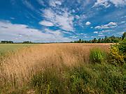 Krajobraz w okolicach Krynek, Polska<br /> Landscape near Krynki, Poland