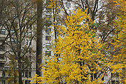 Yellow fall leaves against the background of buildings on Central Park west in NYC