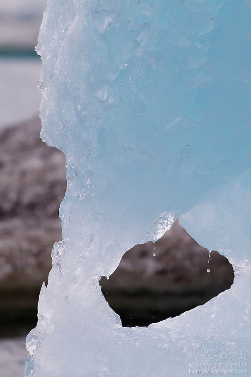 A window melts through a huge iceberg in Jökulsárlón, a glacial lagoon located in southern Iceland. Some of the ice in the lagoon is 1,500 years old. Over time, air has been pressed out of the ice, resulting in the blue color. Without air to reflect it, blue light is able to penetrate deep into the ice.