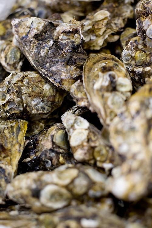 Belo Horizonte_MG, Brasil...Festival Gastronomico Sabor e Saber, na foto detalhe de ostras...The Gastronomic Festival Sabor e Saber, in the photo some oysters...Foto: BRUNO MAGALHAES / NITRO