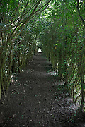 Light at end of tunnel formed by young trees growing at side of pathway, Suffolk, England, UK