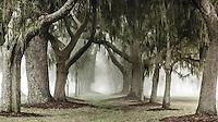 A panorama view of the Avenue of Oaks of Retreat Plantation, St. Simons Island, Georgia.  Desaturated.