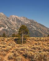 Grand Teton Panorama. Four of five