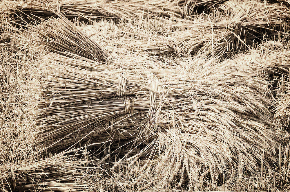 Wheat sheaves.