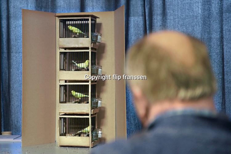 Nederland, Zwolle, 3-1-2020 De Nederlandse Bond van Vogelliefhebbers, NBvV organiseert in de IJsselhallen te Zwolle onder de naam VOGEL 2020 de Nederlandse Kampioenschappen voor volièrevogels. In een aparte ruimte kan het zingen van kanaries beluisterd en beoordeeld worden . Zangkanarie, kanarie . Zij organiseert jaarlijks een nationale tentoonstelling, als afsluiting van het tentoonstellingsseizoen. De organisatie van dit evenement steunt grotendeels op honderden vrijwilligers. Zo'n 9.000 wedstrijdvogels van de hoogste kwaliteit en ingezonden door zo'n 1.000 inzenders uit geheel Nederland zijn te bewonderen. Er is een aparte competitie voor jeugdleden. Foto: Flip Franssen