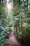 A hiker with a dog explores a trail that wanders through a tall redwood forest.
