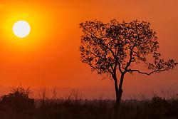 Tree, sunset, Kruger National Park