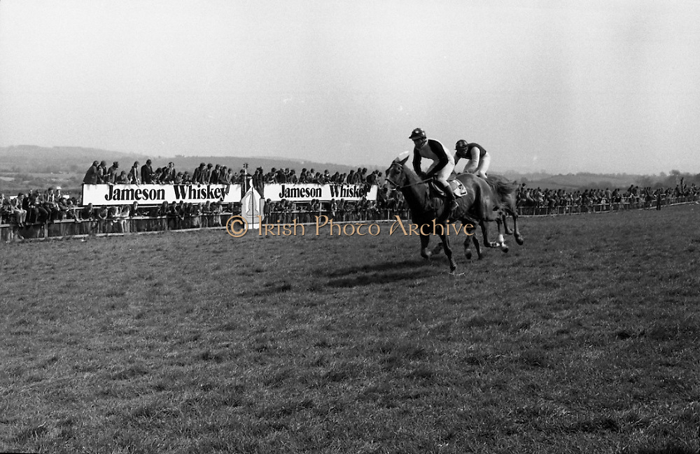 """Racing At Punchestown.     K22..1976..28.04.1976..04.28.1976..28th April 1976..The John Jameson Cup race was run today at Punchestown. The sponsor of the race are Irish Distillers Ltd. The race an extended handicap novice steeplechase is for horses four yers old and upwards that have not won a steeplechase on or before 1st Sept.,75..The race was won by """"No Hill"""" owned by Mrs J.B.O'Callaghan,ridden by Mr T.M.Walsh and trained by Mr R Walsh..Image shows """"No Hill"""" edging in front to take the lead and the title in the closing stages of the race."""