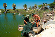 Israel, Coastal Plains, Kibbutz Maagan Michael, Harvesting fish from an intensive growing pool collecting the net after collecting the fish.