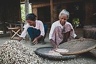 Bagan, Myanmar - November 13, 2011: Two Burmese women sort peanuts grown in their village on the outskirts of Bagan.