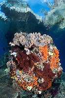 Above a coral encrusted boulder, a small island stretches from the seafloor like a ship's bow<br /> <br /> Shot in Raja Ampat Marine Protected Area West Papua Province, Indonesia