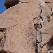Joshua Tree National Park in California straddles two deserts: Mojave Desert and Colorado Desert. The park got its name from the unique Joshua Trees (Yucca brevifolia) that fill the more than 1,200 square miles. The boulder rocks makes Joshua Tree NP a rock climbers' destination. Climbing routes range in difficulty and climbing tours and lessons are available.
