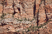 Verticle cliff of Navajo Sandstone in Zion National Park