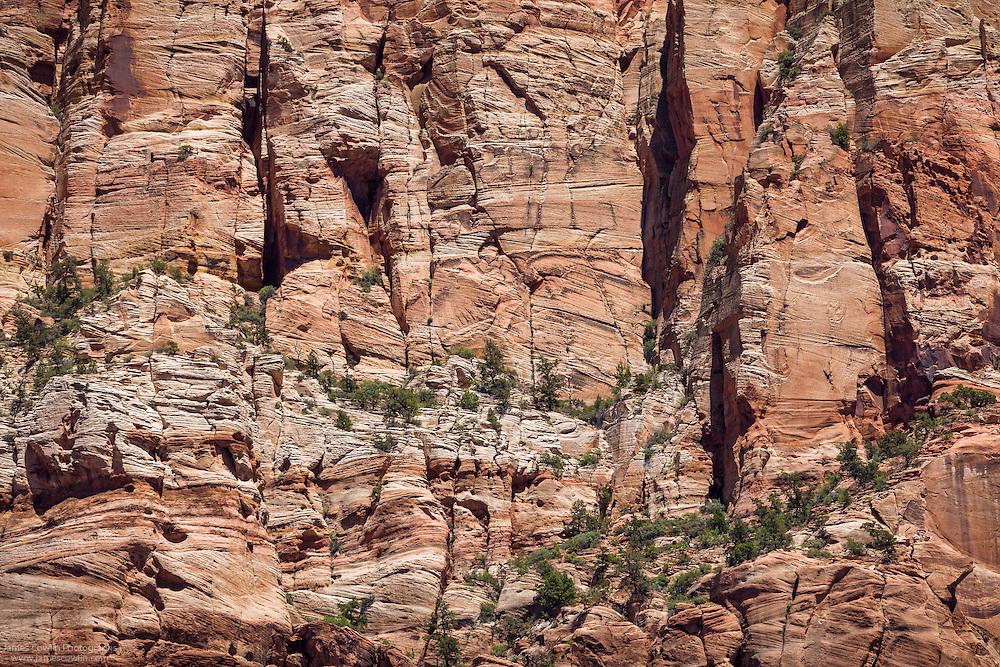Verticle cliff of Navajo Sandstone in Zion National Park
