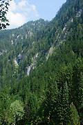 Austria, Tyrol  Zillertal forest near Mayrhofen