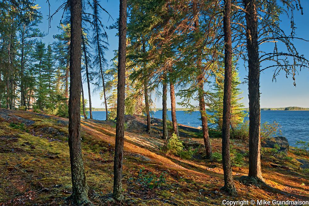 Boreal forest at edge of Setting Lake at sunrise<br />Setting Lake Wayside Park near Wabowden<br />Manitoba<br />Canada