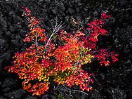 Like fireworks, this series of photos sort of burst into existence. Most of my trips to take photos are well-planned in advance, but, in this case, I was taken by surprise while driving home from Sisters, Oregon. By the time I had pulled off the highway and hiked onto this lava field in the forest, the sun had set and everything was illuminated by a brilliant alpen glow. I was thrilled by this display of legal fireworks in the national forest!