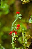 Nature/Flora