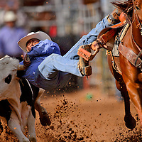 Matthew Jodie jumps on a calf as he competes in the steer wrestling portion of the New Mexico High School Rodeo Association state finals on Friday at Red Rock Park in Gallup.