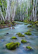Stream near Lake Sonoma in Sonoma County, CaliforniaStream near Lake Sonoma in Sonoma County, California