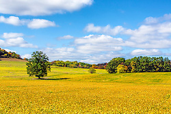 More golden autumn fields in Saint Charles County