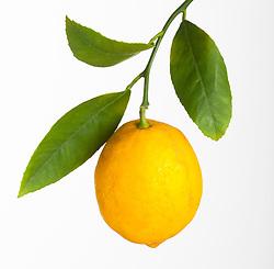 Lemon fruit cut out