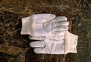 Garden gloves resting before the final work of Autumn.  Nisswa Minnesota USA